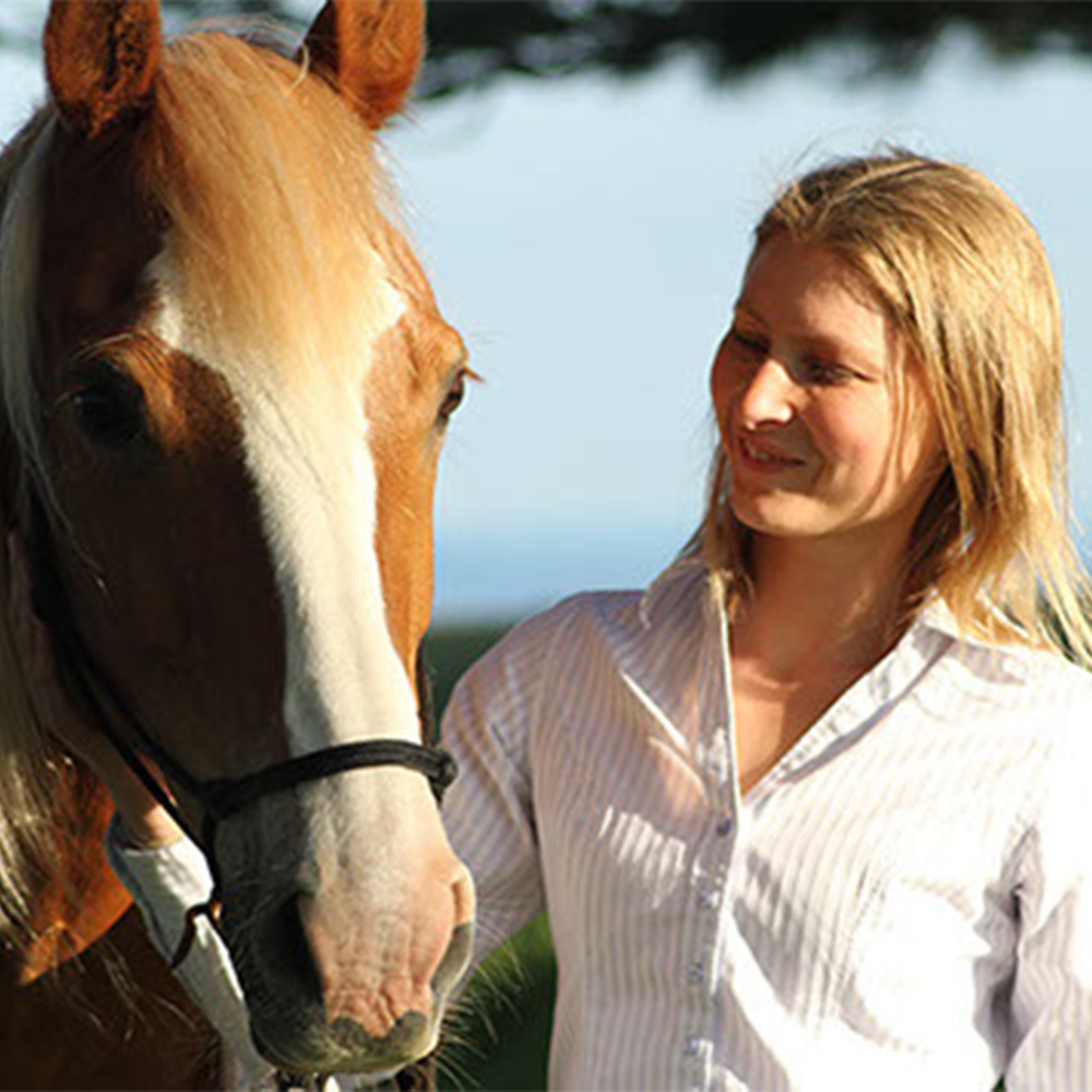vet and brown horse